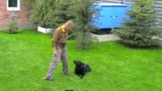 Clicker Obedience Training German Shepherd Puppy.