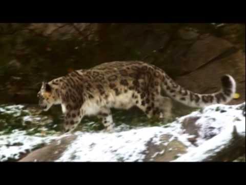 Global Snow Leopard Conservation Forum Bishkek October 22-23, 2013