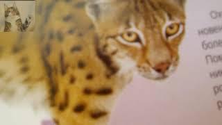 Энциклопедия  животных 2 часть