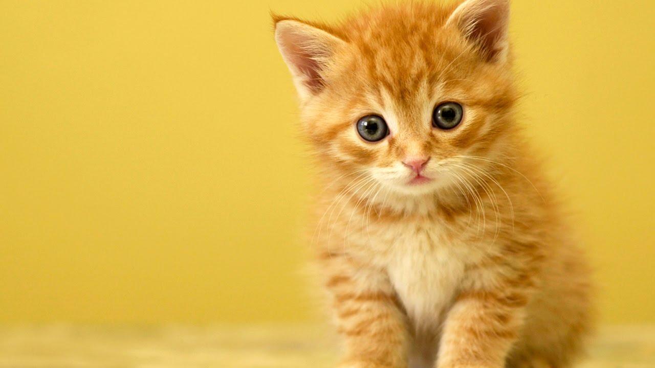 filhotes gato
