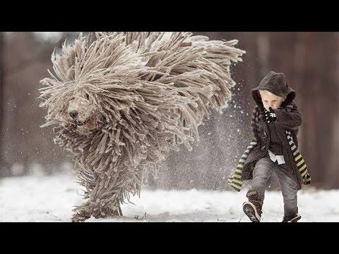 Puli - Unique Dreadlocks / Loyal Dog Camouflage Master/