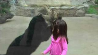 Black Leopard Attacks Little Girl at Zoo