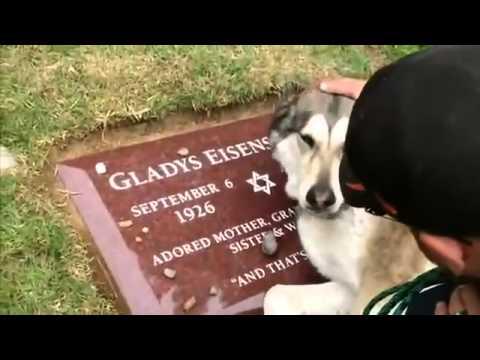 Собачка плачет на могиле хозяина