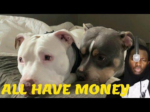 Արտասահմանցու ռեակցիան || Kar - All Have Money (ft. Y.A.K.)  █▬█ █ ▀█▀|| (REACTION)
