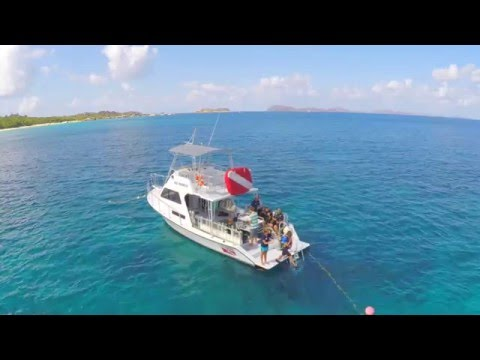 Dive BVI - It's what we do!