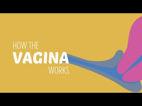How the vagina — pic 9