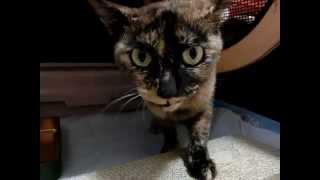 保護中のさび猫 1 thumbnail