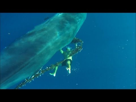Fearless Free Diver Saves Huge Whale Trapped In Fishing Line