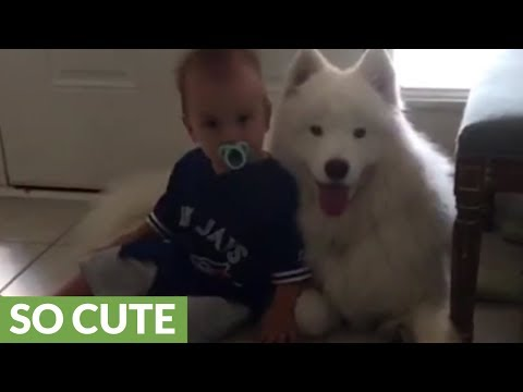baby-and-samoyed-preciously-cuddle-together