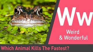 which-animal-kills-the-fastest-the-quick-and-the-curious