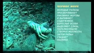 Предельная глубина - 316  - Черное Море. Крым.