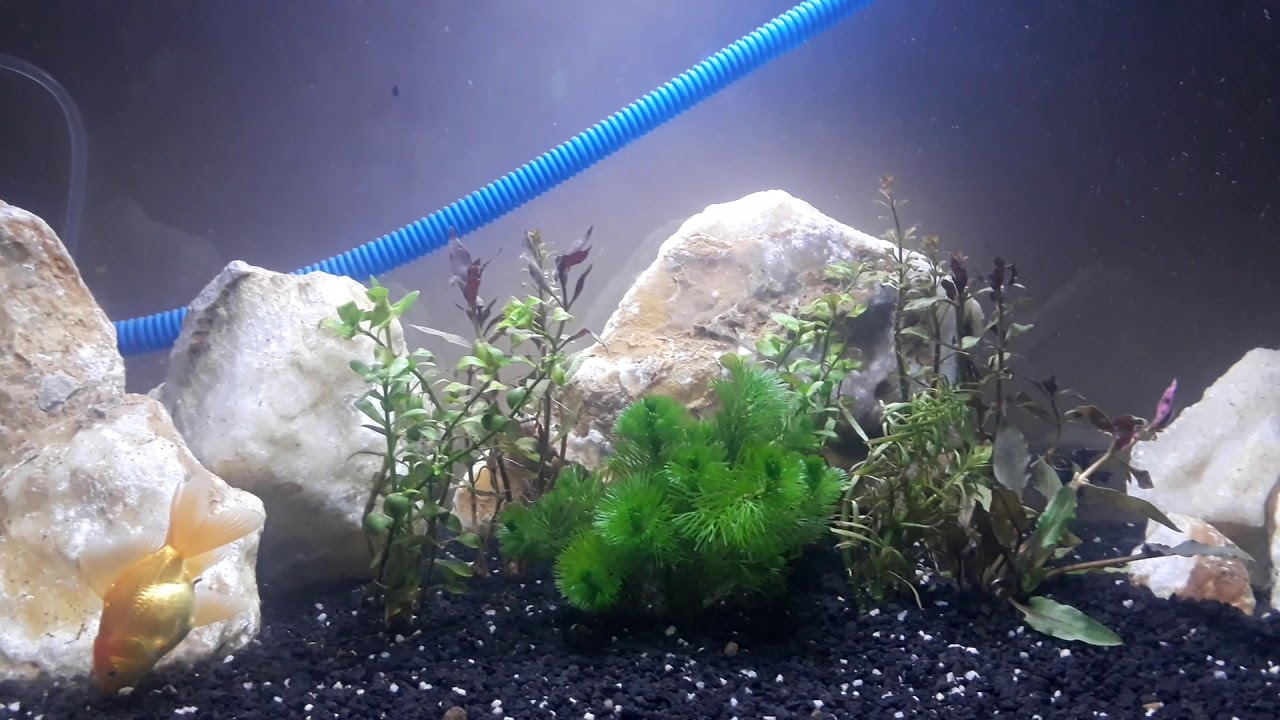 Aquascape batu kristal - YouTube