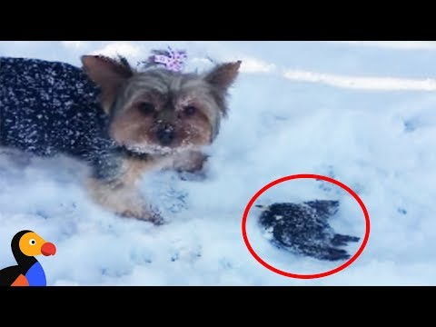 Woman Rescues Frozen Bird Rescued With A Blow Dryer | The Dodo
