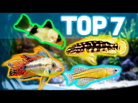 MY TOP 7 BEST AQUARIUM FISH FOR 20 GALLON AQUARIUMS