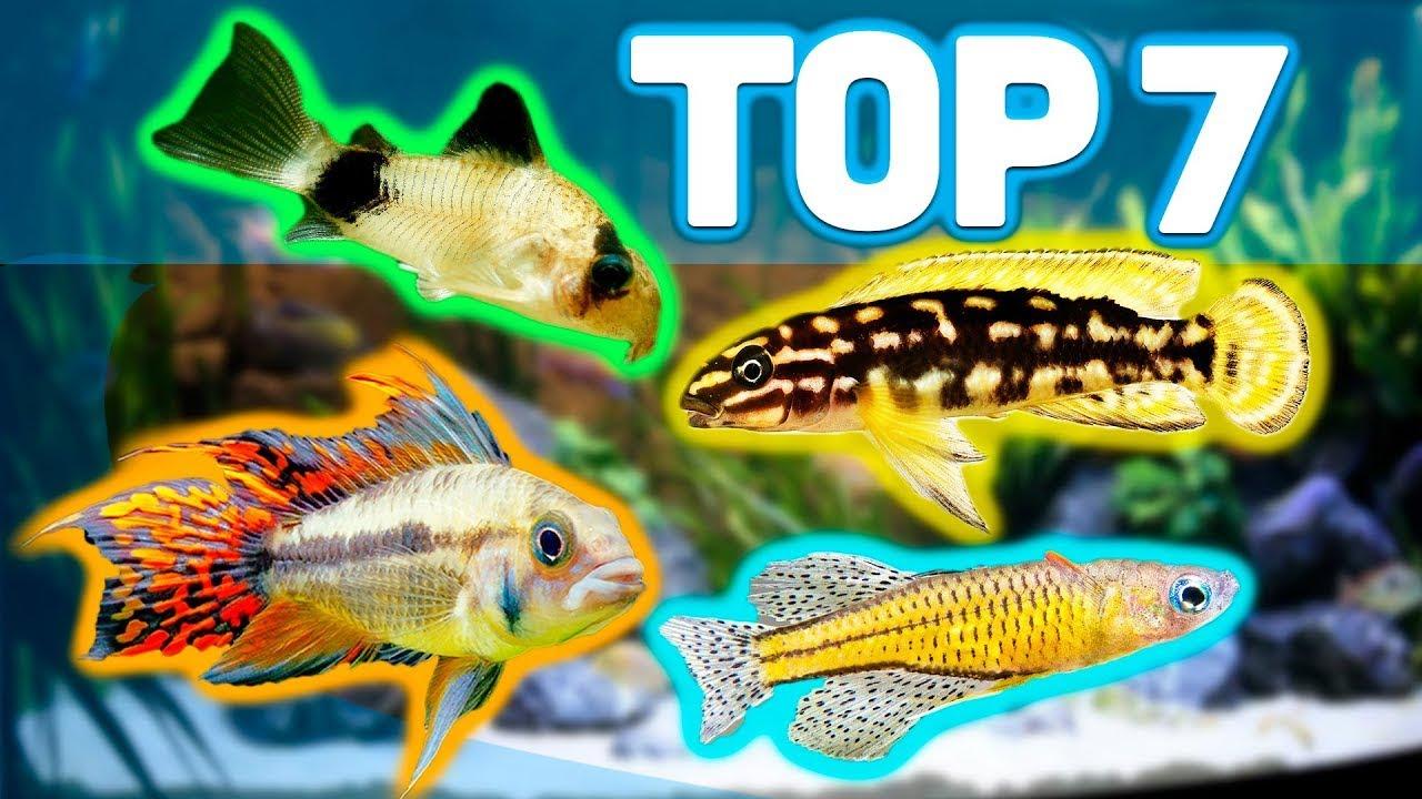 my top 7 best aquarium fish for 20 gallon aquariums youtube