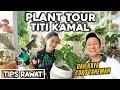 Tips Simple Rawat Tanaman Indoor Titi Kamal Supaya Rimbun Subur Bahagia