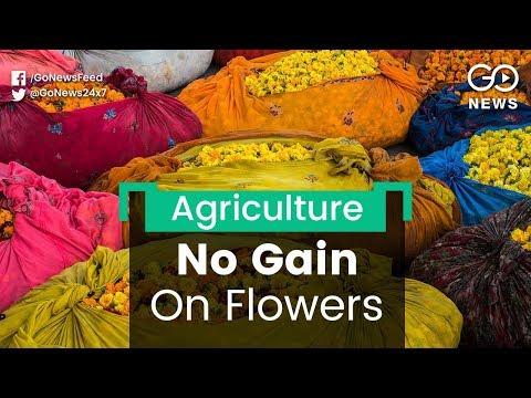 Flower Farmers Incur Losses