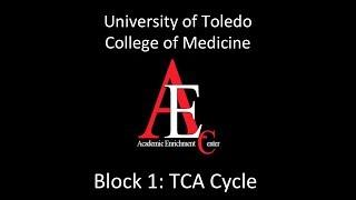 tca cycle