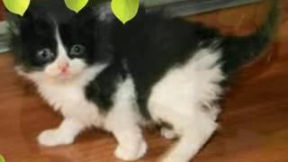 Видео с картинками черно белой кошки