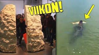 Mies Asui Kiven Sisällä VIIKON? Alligaattori Varastaa Kalan Pikkupojalta!