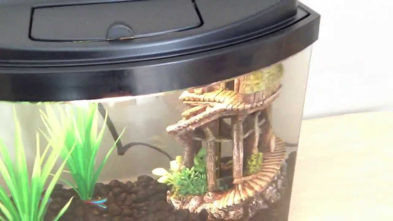 5 gallon betta fish and neon tetra tank youtube for Neon fish tank