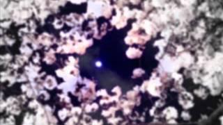 KABさんの「月夜ノ桜」を歌ってみました。ボカロのは2曲目です。そろそ...