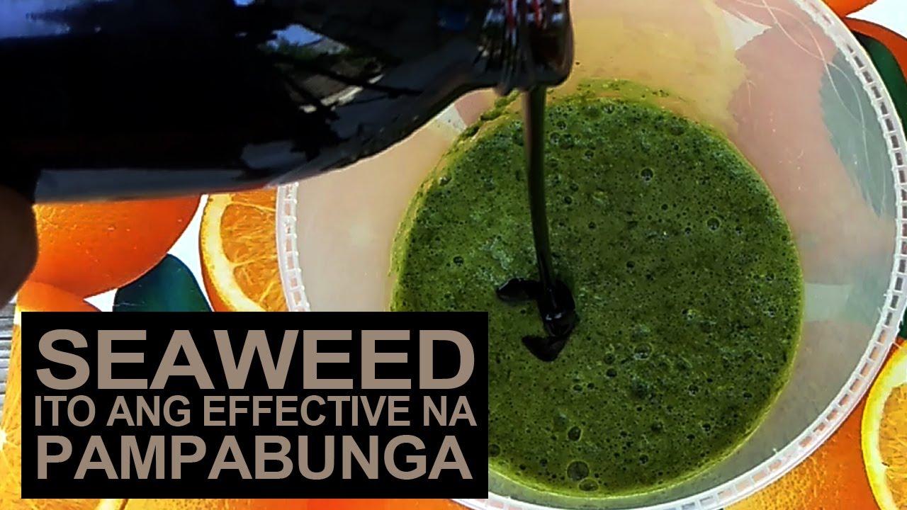 Ito Ang Epektibong Pampabulaklak At Pampabunga Ng Mga Halaman.