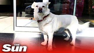 Loyal dog waits outside hospit…