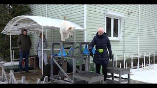 Консультация по выбору породы. Приоритет  белая швейцарская овчарка.