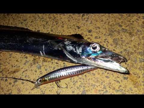Hairtail Fishing At Newcastle