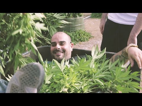 Marijuana Mania Episode 1