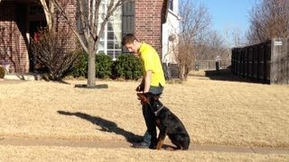 Kingston - Doberman Training Oklahoma