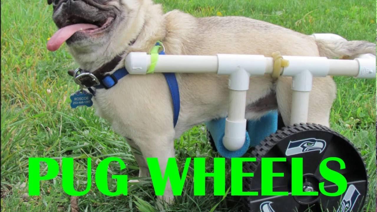Diy Pug Wheels