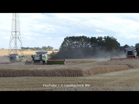3x-claas-lexion-780tt-/-getreideernte---grain-harvest-2019