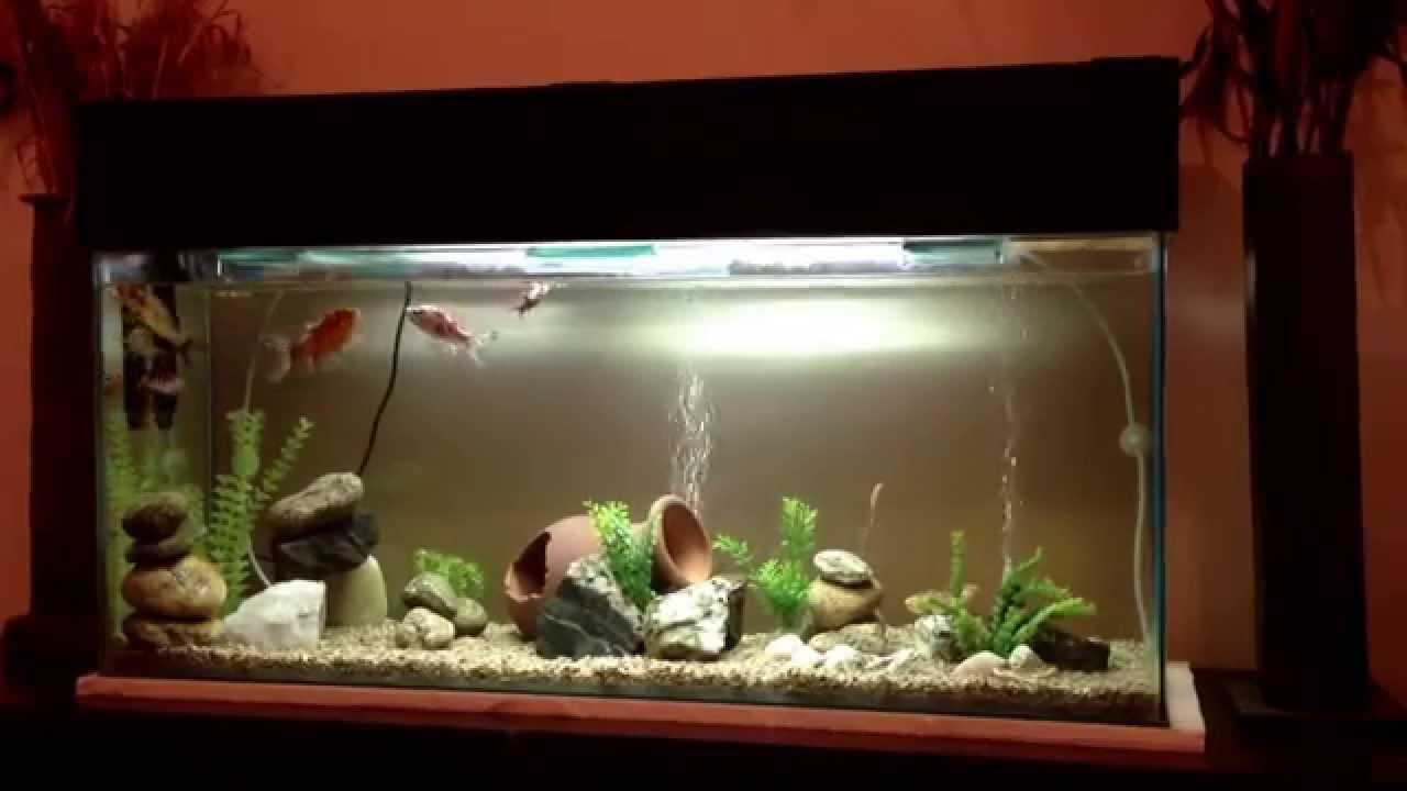 mi acuario de agua fr a carpas koi y subunki youtube