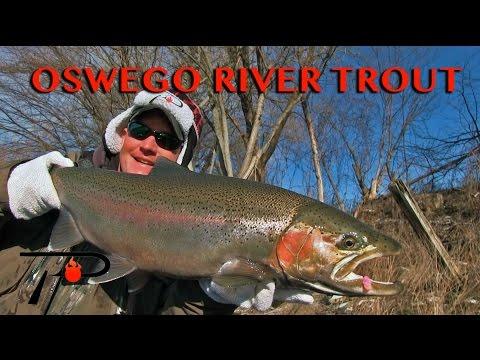 Oswego River Steelhead Fishing