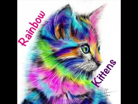 Vaya's Rainbow Kittens Find Joaquin- Children's Bedtime Story/Meditation