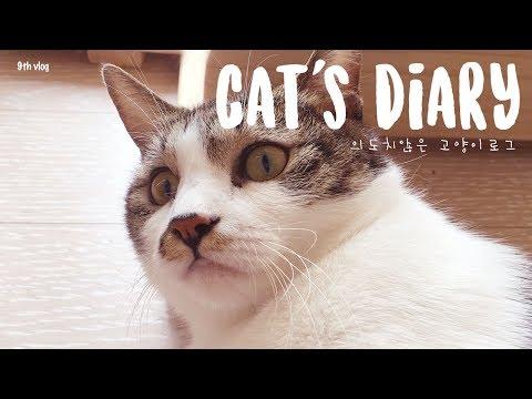 ⎮VLOG⎮ 아홉번째 브이로그 🎀의도치 않은 고양이로그😻 ⎮ cat's diary ⎮