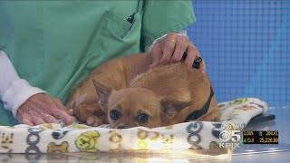 PET EXPERT: Dr. Jill Chase Talks About Reasons Behind Sudden Weight Loss In Pets