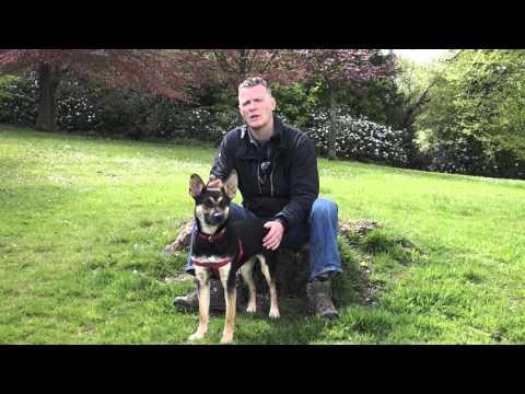 Bart Simpson, nuisance barking and loose lead walking