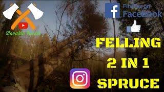 TREE FELLING#FELLING 2 in 1 SPRUCE#CHAINSAW STIHL MS 440#ŤAŽBA DREVA 2017