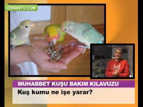 Kuş kumu ne işe yarar.