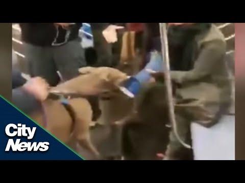 Pit bull attacks woman on NYC subway
