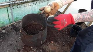 "#Overwinteringpotatochallenge    Set By   ""Allotmental""   Please Pop To His Channel    (462)"