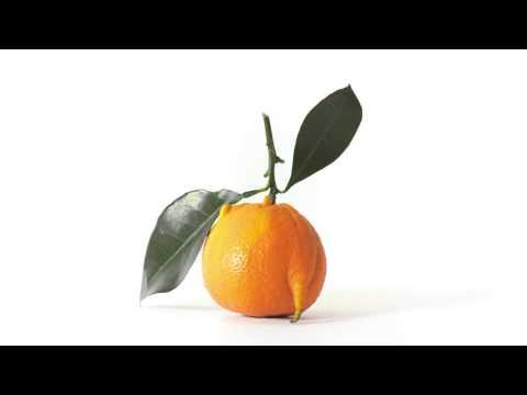 Intermarché   Les Fruits et Légumes Moches   La clémentine introvertie