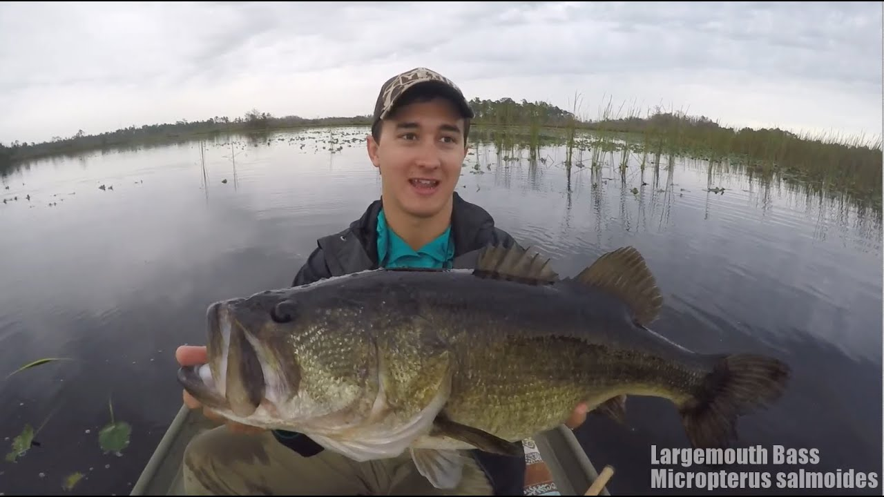 Bass fishing big bass on frog 6 lbs youtube for Youtube bass fishing