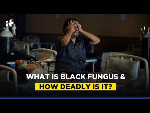 What Is Mucormycosis Or Black Fungus, And Why Is Affecting So Many Covid-19 Patients?