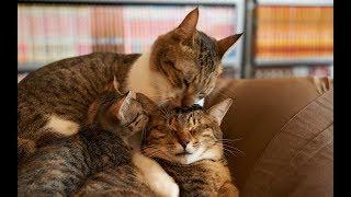 Кошки. Передержка для кошек.Каких только нет.....