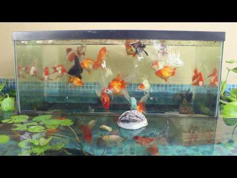 Inverted Aquarium In My Pond