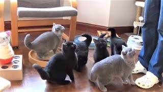 Cat cute fun videos, mischievous kittens, the funny cat 2020 # 7